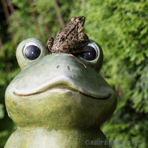 großer und kleiner Frosch