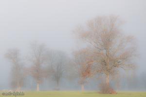Herbst und Nebel